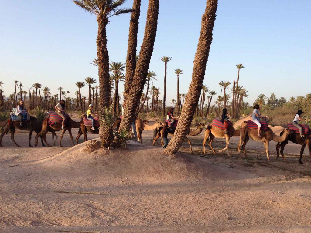excursion-marrakech-camel-trek-day-trip-1024×768
